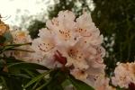 pink-flower-2